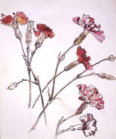 Carnation Beatrix Potter, Carnation, about 1904. © Frederick Warne & Co