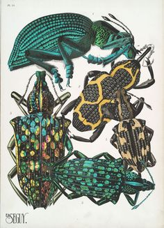 Insect collages from both the Butterflies and Insects collections at the NYPL Digital Gallery, circa 1920's.