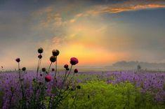 Flowers - Pixdaus