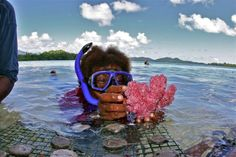 When everything is done in moderation. New research shows live coral trade could actually help preserve reefs