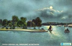 Tarpon Springs postcard post card - Moonlight on the bay, Tarpon Springs, FL