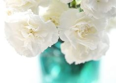 carnations-love their scent