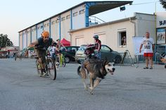 Kostka kolobežky DogFest 2015 Street View, Outdoor, Outdoors, Outdoor Games, The Great Outdoors