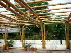 de bambú.