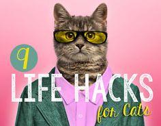9 Life Hacks for Cats | eBay