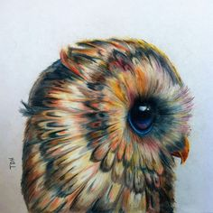 Owl by Tabitha Harris in Colored Pencil. Instagram: @tattoometabitha