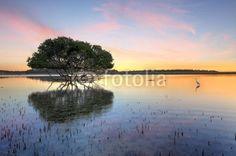 Sunrise Mangrove Tree and White Egret