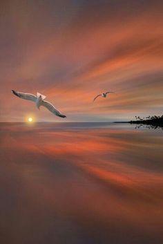 beaches, dreams, and birds
