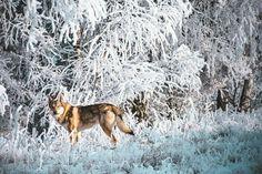 Prajem vám krásny príchod víkendu ;-) #divokavsrdci #angaszvlcejhory #czechoslovakianwolfdog #wolfdog #slovakia #slovaknature #slovak_vibes #folkmagazine #folkgood #folkvibe #superhubs #exklusive_shot #shotaward #dnescestujem #mobilemag #nature #adventures #wanderout #womenwhoexplore #lostinwild #visualoflife #dreamcometrue #lifeofadventure #wildheart #stayandwander #awakethesoul #nikon #nikonphotography