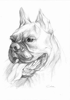 Boxer ADAM  Pencil Drawing Sketch by PETARTPortraits on Etsy, $25.00