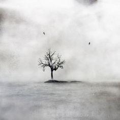 Päivi Hintsanen: Alone in a Tree, 2014