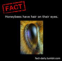 Honeybees | Fact Daily