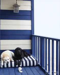 Turner's English Labradors, Daisy, left, and Nacho, on the deck, which is painted in custom Benjamin Moore colors.