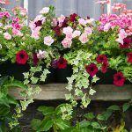 C'est le moment de réaliser votre jardinière. Découvrez nos conseils et astuces pour la réussir à coup sûr !