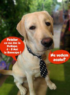 Mascota Pet Expo 2016 | Asociatia pentru protectia animalelor Robi