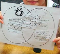 1000+ images about bear unit on pinterest | polar bears ... black bear polar bear venn diagram