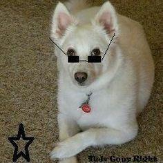 """My Girl """"NIKI DOGG"""""""