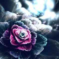 Rose of the Dusk by C-91 on deviantART