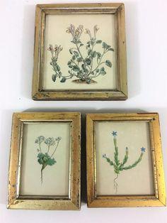 Botanical Antique 1840 Engraving Gold Framed Print Hand Color Set 3 Floral Herb #Realism
