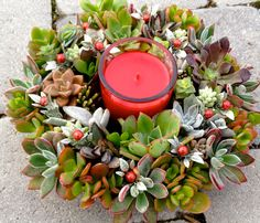Sale Living Succulent Wreath Succulent by WoogiesPlace on Etsy
