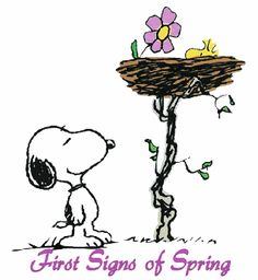 First Signs of Spring spring flowers snoopy season graphic happy spring spring greeting spring quote Snoopy Comics, Peanuts Cartoon, Peanuts Snoopy, Peanuts Comics, First Flowers Of Spring, Snoopy Und Woodstock, Snoopy Quotes, Peanuts Quotes, Spring Aesthetic