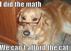 No need to double check this dog's math. He looks legit. #doghumor