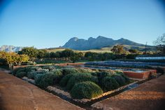 Babylonstoren, a special place to stay in the Cape Winelands, South Africa. Stylish rooms and the perfect countryside escape. A highlight of our honeymoon.