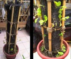 Zelf een verticale tuin maken in een plantenpot   Tuin en Balkon