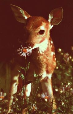 Cute bambi smelling a flower