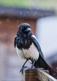 one for sorrow….
