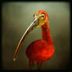 Portrait d'un oiseau rouge by ~Renoux on deviantART