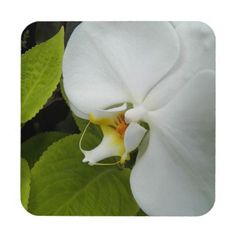 White Moth Orchid Floral Coaster Set  $28.45  by northwestphotos  - cyo customize personalize diy idea