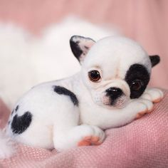 Cute Needle felted wool animals dog (Via @nata_kravtsova)