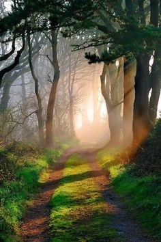 Godolphin Woods, Cornwall, England by Tony Armstrong