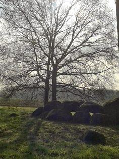 Hunebed Kampsheide, Balloo, Drenthe.