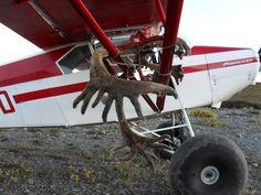 Caribou Hunting Alaska
