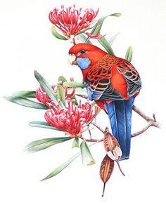 4 часть. Красивые картинки с птицами.   Творческая мастерская Марины Трублиной