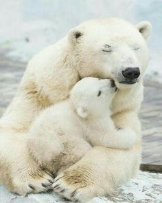 Pin by Mr. Hap on Cute Baby Animals Pin by Mr. Hap on Cute Baby Animals – Nature Animals, Animals And Pets, Wildlife Nature, Animals With Their Babies, Artic Animals, Animal Babies, Small Animals, Beautiful Creatures, Animals Beautiful