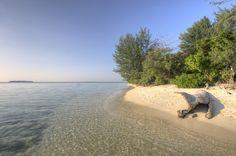 Cemara kecil island