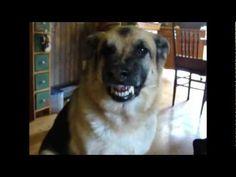 Ultimate Dog Teaser -  Dog Talking For Bacon