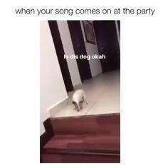 funny memes for boyfriend . funny memes for women . funny memes about work . Funny Memes About Work, Funny Kid Memes, Funny Animal Memes, Funny Relatable Memes, Videos Funny, Funny Dogs, Girl Memes, Funny Stuff, Memes Humor