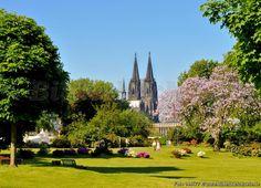 Köln Rheinpark - Cologne Rhinepark  http://www.bilderbuch-koeln.de/bilder/k%C3%B6ln_deutz_der_dom_vom_rheinpark_gesehen_fototafel_87a3144177_978x1304xin.jpeg