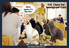 ESL Class for Immigrant Cats