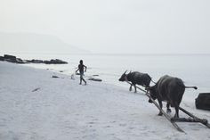 girl-with-buffalos-on-koh-rong-beach_8780