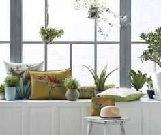 Zimmerpflanzen mögen den Winter nicht. Wenn es draußen kalt wird, leiden Gummibaum, Efeu, Zimmerlinde und Co. Gründe dafür sind trockene Raumluft, zu warme Temperaturen, wenig Licht sowie Zugluft. Es gibt ein paar einfache Tricks, wie ihr eure Zierpflanzen für die kalte Jahreszeit fit machen könnt.