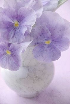 In My Home - Lilac Flowers in a White Porcelain Vase...<3