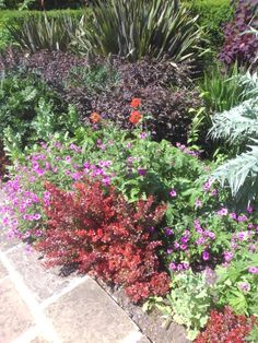 Flowers London, Flowers, Plants, Florals, Planters, Flower, Blossoms, Plant, Planting