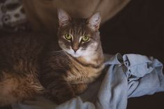 Pet Insurance for Cats? My Readers Share Their Experiences