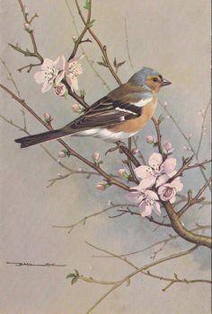 Chaffinch Bird Artwork, Bird Illustration, Bird Drawings, Bird Pictures, Colorful Birds, Wildlife Art, Bird Prints, Chinese Art, Beautiful Birds