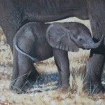 I want this Pip McGarry which is being exhibited at Valk Chuah Frame Gallery on the nov > baby ele 16 by 12 2012 Frame Gallery, My Style, Elephants, Baby, Pictures, Animals, Gallery Frames, Photos, Animales